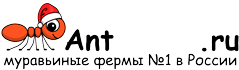Муравьиные фермы AntFarms.ru - Калининград